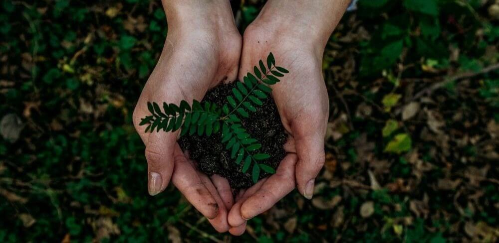 Direito ambiental OAB: duas mãos juntas com terra e uma planta saindo